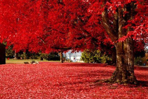 el-rojo-en-la-naturaleza