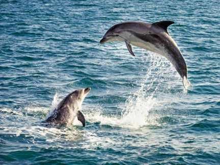delfines_0