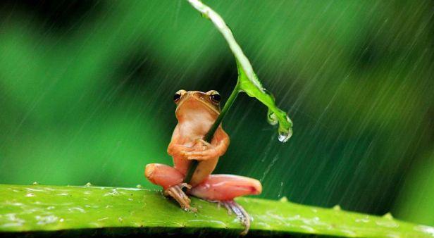 animales-y-sus-paraguas-en-la-naturaleza